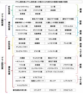 グラム陽性菌とグラム陰性菌に分類される代表的な60種類の細菌の種類