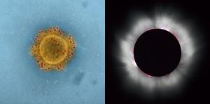 コロナウイルスと太陽のコロナ